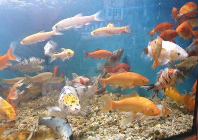 Ryby oczko wodne Nowy Dwór Mazowiecki ZooNemo