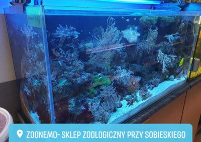 Akwarium morskie Legionowo ZooNemo