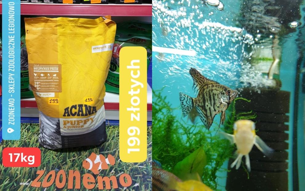 Nowa dostawa ryb akwariowych, królików świnek morskich. Karma dla psa w dobrej cenie…