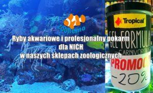 Ryby akwariowe i profesjonalny pokarm dla NICH w naszych sklepach zoologicznych
