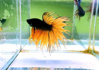 ryby akwariowe Legionowo Nowy Dwór Mazowiecki sklepy zoologiczne ZooNemo (1)