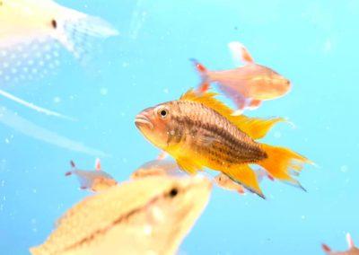 ryby akwariowe Legionowo Nowy Dwór Mazowiecki sklepy zoologiczne ZooNemo (5)