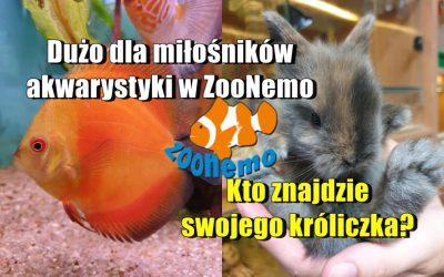 Dużo dla miłośników akwarystyki w ZooNemo. Kto znajdzie swojego króliczka?
