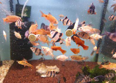karmienie ryb Vitabin firmy Tropical Legionowo Nowy Dwór Mazowiecki Zoonemo 3