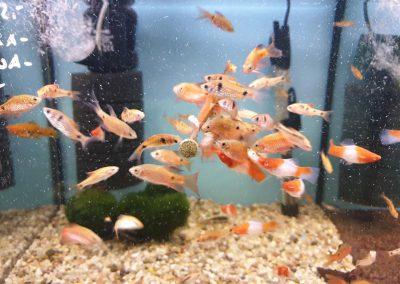 karmienie ryb Vitabin firmy Tropical Legionowo Nowy Dwór Mazowiecki Zoonemo 4