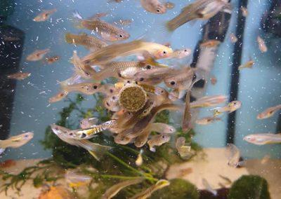 karmienie ryb Vitabin firmy Tropical Legionowo Nowy Dwór Mazowiecki Zoonemo