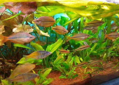 ryby akwariowe Legionowo Nowy Dwór Mazowiecki ZooNemo (1)