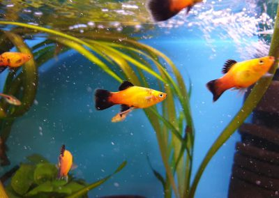 ryby akwariowe Legionowo Nowy Dwór Mazowiecki ZooNemo (2)