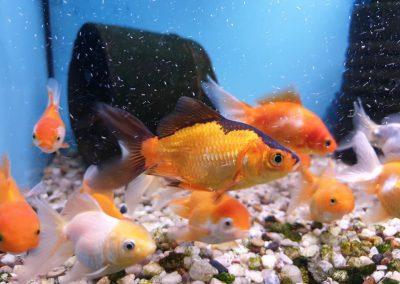 ryby akwariowe Legionowo Nowy Dwór Mazowiecki ZooNemo (4)