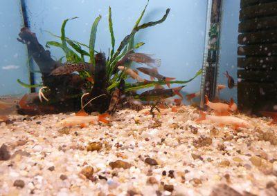 ryby akwariowe Legionowo ul. Sobieskiego ZooNemo 10