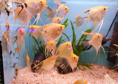 ryby akwariowe Legionowo ul. Sobieskiego ZooNemo 12
