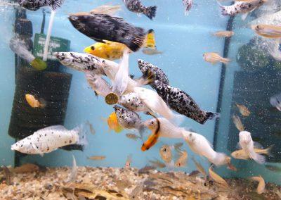 ryby akwariowe Legionowo ul. Sobieskiego ZooNemo 2