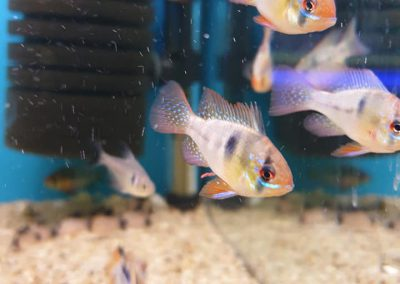 ryby akwariowe Legionowo ul. Sobieskiego ZooNemo 4