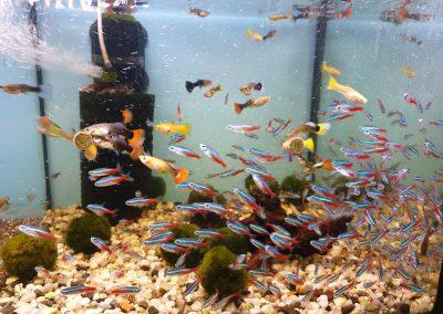 ryby akwariowe Legionowo ul. Sobieskiego ZooNemo
