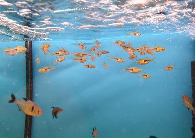 ryby akwariowe Legionowo ul. Sobieskiego ZooNemo 5