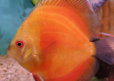 ryby akwariowe Legionowo ul. Sobieskiego ZooNemo 6