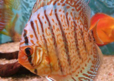 ryby akwariowe Legionowo ul. Sobieskiego ZooNemo 7