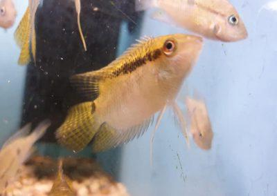 ryby akwariowe Legionowo ul. Sobieskiego ZooNemo 8