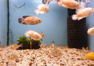 ryby akwariowe Legionowo ul. Sobieskiego ZooNemo 9
