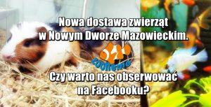 Nowa dostawa zwierząt w Nowym Dworze Mazowieckim. Czy warto nas obserwować na Facebooku?