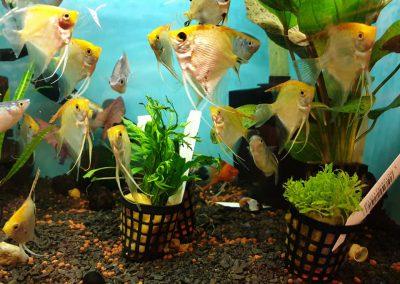 Promocja ryby akwariowe Legionowo Nowy Dwór Mazowiecki ZooNemo 2