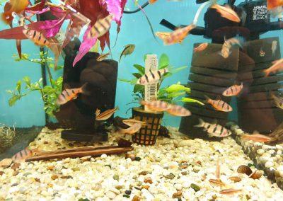 Promocja ryby akwariowe Legionowo Nowy Dwór Mazowiecki ZooNemo 3