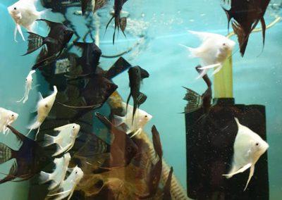 Promocja ryby akwariowe Legionowo Nowy Dwór Mazowiecki ZooNemo 4