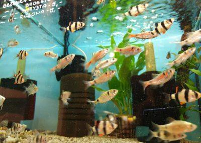 Promocja ryby akwariowe Legionowo Nowy Dwór Mazowiecki ZooNemo 5