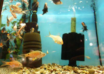 Promocja ryby akwariowe Legionowo Nowy Dwór Mazowiecki ZooNemo 6