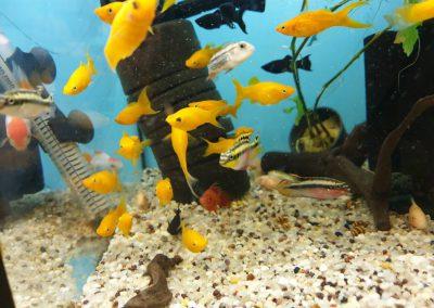 Ryby akwariowe Nowy Dwór Mazowiecki ZooNemo 2