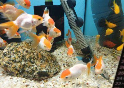 Ryby akwariowe Nowy Dwór Mazowiecki ZooNemo