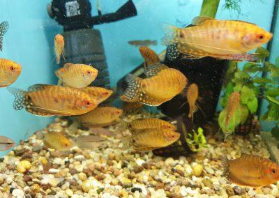 Ryby akwariowe Nowy Dwór Mazowiecki ZooNemo 6