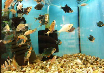 Ryby akwariowe Nowy Dwór Mazowiecki ZooNemo 7