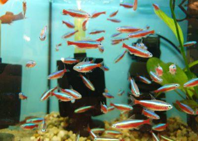 Ryby akwariowe Nowy Dwór Mazowiecki ZooNemo 8