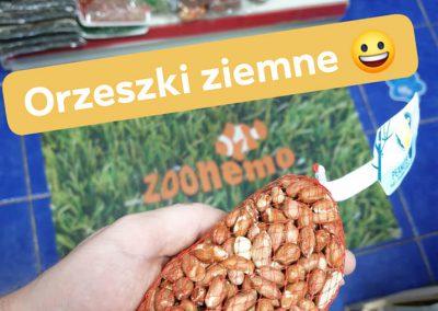 orzeszki ziemne Legionowo Nowy Dwór Mazowiecki ZooNemo