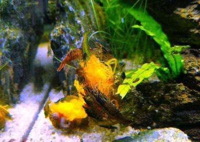 Dynia Hokkaido - krewetki ZooNemo Legionowo Nowy Dwór Mazowiecki 2