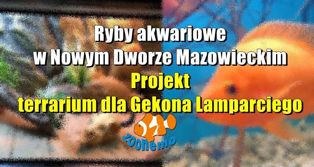 Ryby akwariowe w Nowym Dworze Mazowieckim. Projekt terrarium dla Gekona Lamparciego