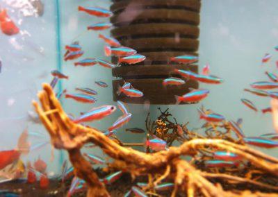 ryby akwarium ZooNemo Legionowo Nowy Dwór Mazowiecki 10