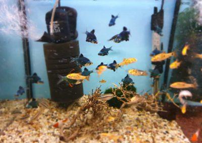 ryby akwarium ZooNemo Legionowo Nowy Dwór Mazowiecki 11