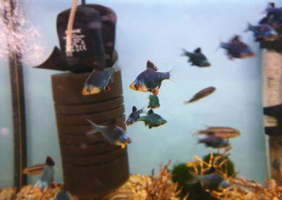 ryby akwarium ZooNemo Legionowo Nowy Dwór Mazowiecki 12