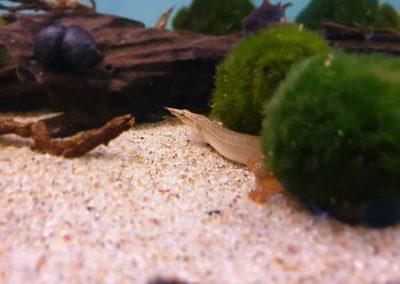 ryby akwarium ZooNemo Legionowo Nowy Dwór Mazowiecki 14