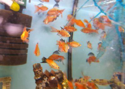 ryby akwarium ZooNemo Legionowo Nowy Dwór Mazowiecki 2