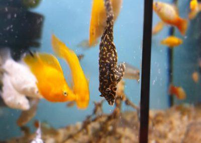 ryby akwarium ZooNemo Legionowo Nowy Dwór Mazowiecki 4