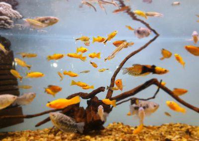 ryby akwarium ZooNemo Legionowo Nowy Dwór Mazowiecki