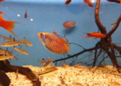 ryby akwarium ZooNemo Legionowo Nowy Dwór Mazowiecki 5