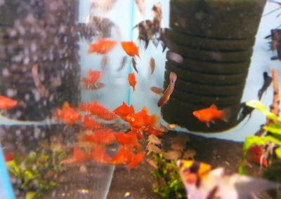ryby akwarium ZooNemo Legionowo Nowy Dwór Mazowiecki 8