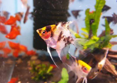 ryby akwarium ZooNemo Legionowo Nowy Dwór Mazowiecki 9