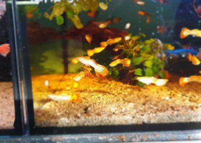 ryby akwarium ZooNemo Legionowo sobieskiego 2