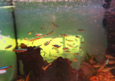 ryby akwarium ZooNemo Legionowo sobieskiego 4