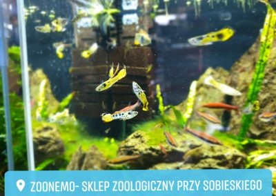 ryby akwarium ZooNemo Legionowo sobieskiego